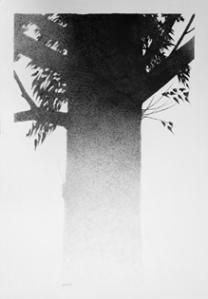 guitard-arbres7